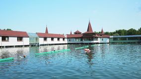 Озеро летом - лоток Heviz видеоматериал