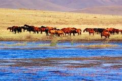 озеро лошадей Стоковые Изображения RF