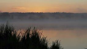 Озеро на великолепном заходе солнца в лете Оно покрыто с туманом сток-видео