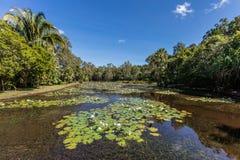 Озеро на садах пирамид из камней ботанических, зона свежая вода пирамид из камней, Квинсленд, Австралия стоковые фотографии rf