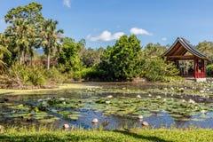 Озеро на садах пирамид из камней ботанических, зона свежая вода пирамид из камней, Квинсленд, Австралия стоковая фотография