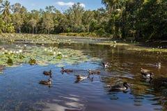 Озеро на садах пирамид из камней ботанических, зона свежая вода пирамид из камней, Квинсленд, Австралия стоковые изображения
