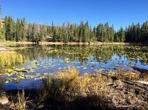 Озеро нимф Стоковая Фотография