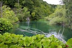 озеро одичалое Стоковое Фото