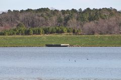 Озеро окруженное деревьями и растительностью стоковые фотографии rf