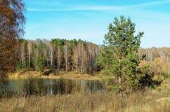 Озеро окружено лесом Стоковое Изображение RF