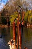 Озеро осен с тростниками Стоковое Изображение RF