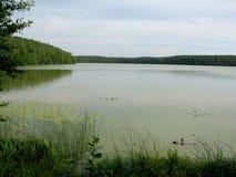 Озеро, остров и банк Стоковое Изображение RF