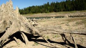Озеро ольшаник Стоковое фото RF