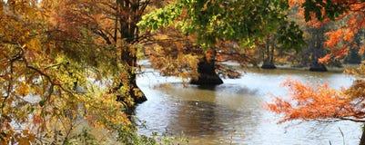 озеро пнистое Стоковые Фотографии RF
