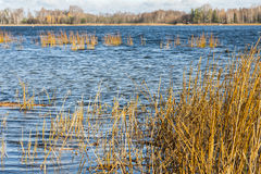 Озеро покрашенное осенью Стоковое Изображение RF