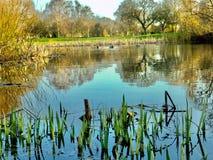 Озеро поле для гольфа стоковые фотографии rf