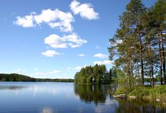 Озеро пущи окруженное с сосенками Стоковые Фотографии RF