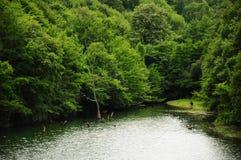 озеро пущи окружило Стоковая Фотография