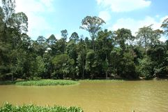 озеро пущи тропическое Стоковое фото RF