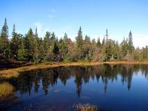 озеро пущи Стоковые Фотографии RF