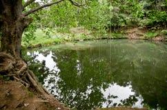 озеро пущи Стоковые Изображения