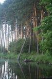 озеро пущи Стоковое Изображение RF