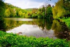 озеро пущи Стоковое Фото