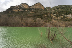 озеро пущи arbersee баварское ближайше стоковые фото
