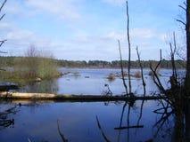 озеро пущи delemere Стоковое Изображение RF