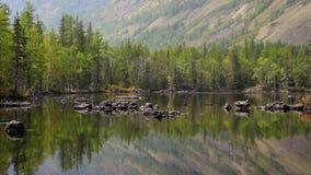 Озеро древесин видеоматериал