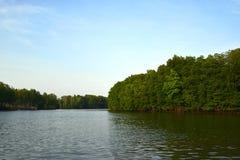 Озеро древесин стоковые изображения rf