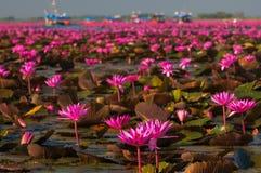 Озеро розового ландшафта лилии воды в провинции Udonthani стоковая фотография