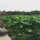 озеро сада стоковые фотографии rf