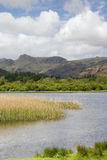 озеро сельскохозяйствення угодье заречья Стоковые Изображения RF