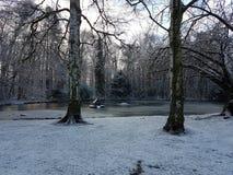 Озеро снег Стоковые Изображения RF