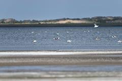 Озеро соли в Гоби Стоковые Изображения