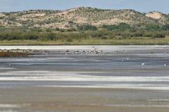 Озеро соли в Гоби Стоковое фото RF