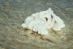 Озеро сол Baskunchak, Россия стоковые фотографии rf