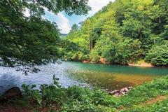 Озеро среди леса бука стоковая фотография