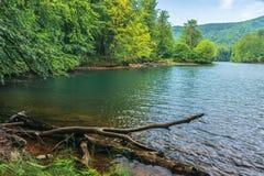 Озеро среди леса бука стоковое изображение