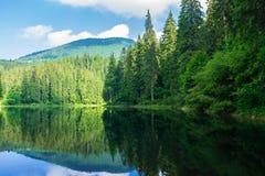 Озеро среди соснового леса стоковые фотографии rf