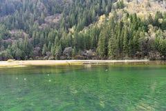 Озеро стрелк бамбуковое, Jiuzhaigou Стоковая Фотография RF