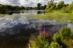 Озеро с деревьями и облаком Стоковое Изображение RF