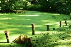Озеро с заводами стоковые изображения rf