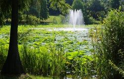 Озеро с лотосом и артезианским фонтаном Стоковые Изображения RF