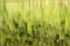 Отражения дерева в озере. Стоковые Фотографии RF