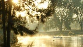 Озеро с пеликанами стоковая фотография