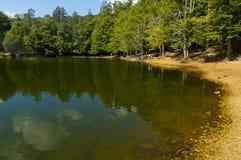 Озеро с пущей Стоковое Фото