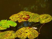 озеро травы засаживает воду Стоковые Изображения