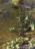 озеро травы засаживает воду стоковое изображение