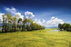 озеро фарфора Стоковые Фото