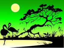 озеро фламингоа Иллюстрация штока