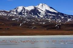 озеро фламингоов Боливии Стоковая Фотография
