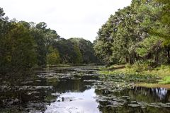 Озеро Флорид с деревьями вокруг его стоковое изображение